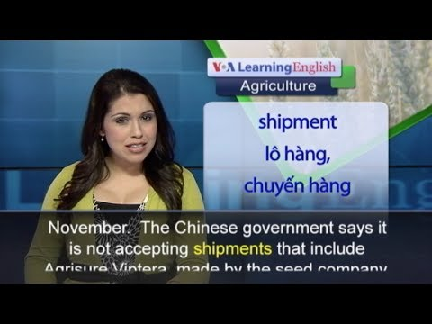 Phát âm chuẩn cùng VOA - Anh ngữ đặc biệt: China GMO Corn (VOA-Ag)