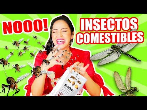 insectos-con-sal,-pepino-cantante,-slime,-zapatos-unicornio!-play-con-sandraciresart