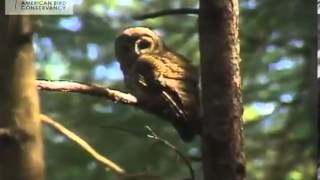 Controversy and Challenges of Conserving the Northern Spotted Owl