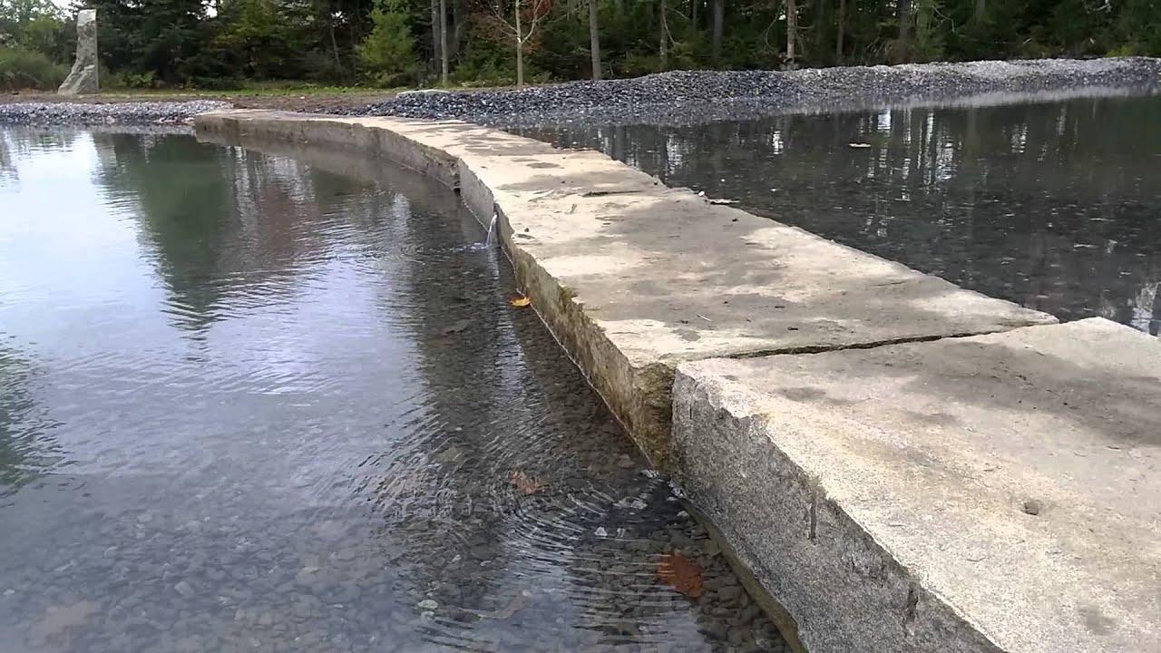 Large Garden Swim Pond Natural Swimming Pool Youtube
