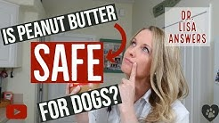 Is peanut butter SAFE for dogs? | Veterinarian Dr. Lisa answers (2018)