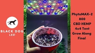 4 x 4 | CBD HEMP | PhytoMAX-2 800 | Grow Along | Final Episode