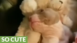 Adorable puppy preciously cuddles with little girl