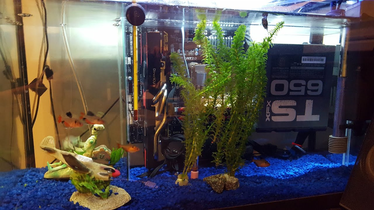 Fish in tank swimming - How To Build A Working Computer And Have Fish Swim Around It