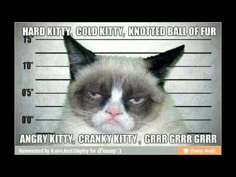 Grumpy Cat Meme Big Bang Theory