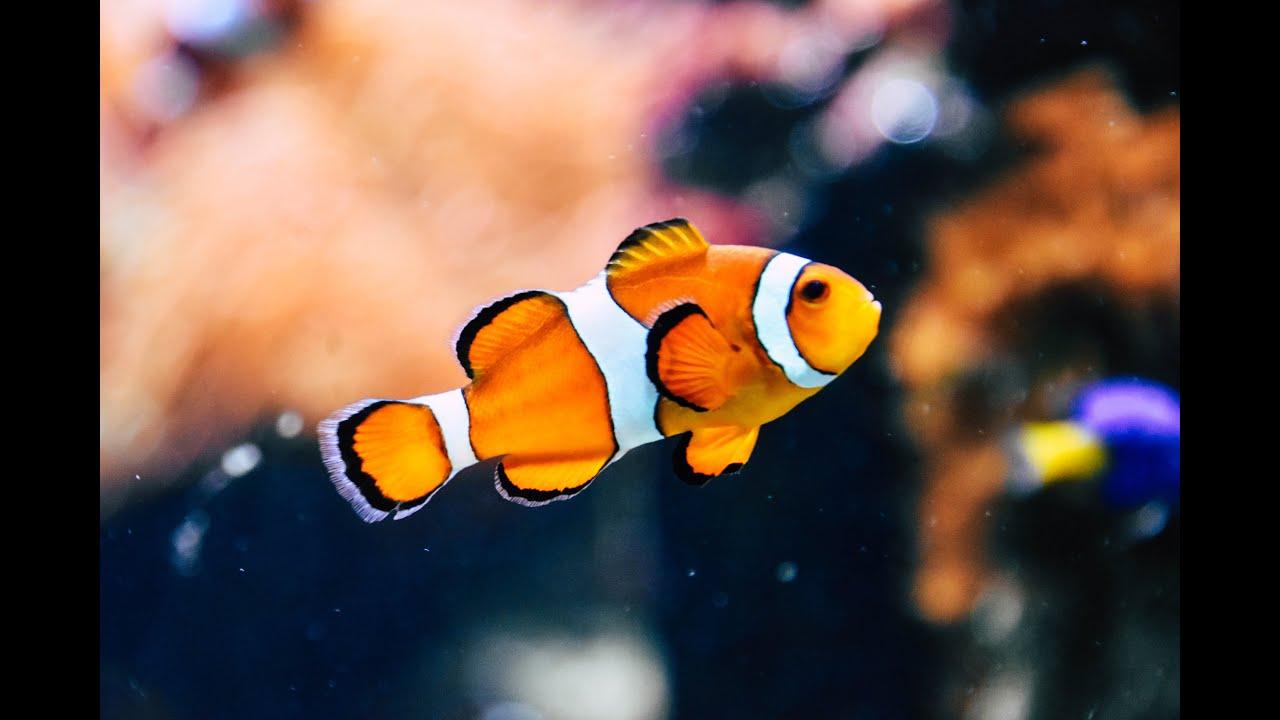 Beautiful Coral Reef Fish, Relaxing Ocean Fish, & Stunning ...