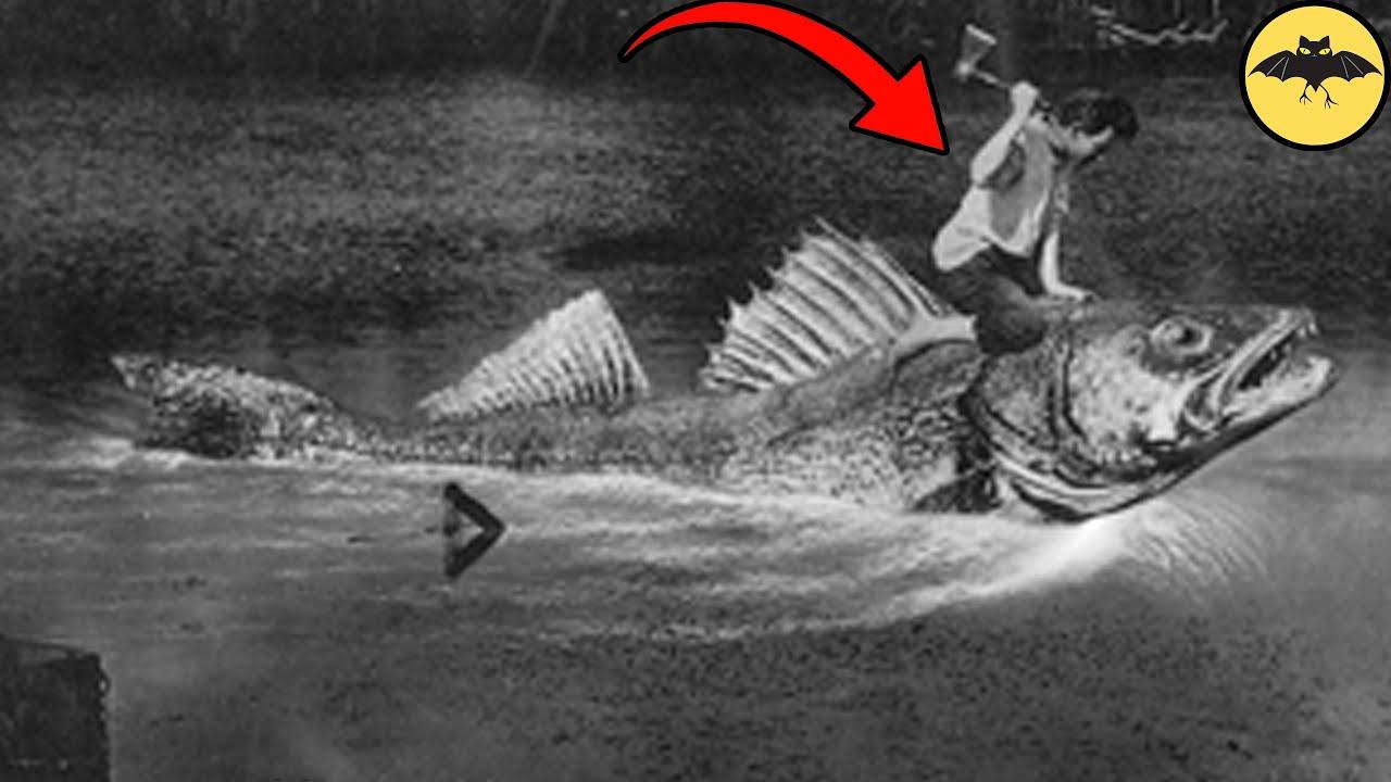 5 Fotos Antiguas más Aterradoras y Misteriosas de la Historia. Ep3.