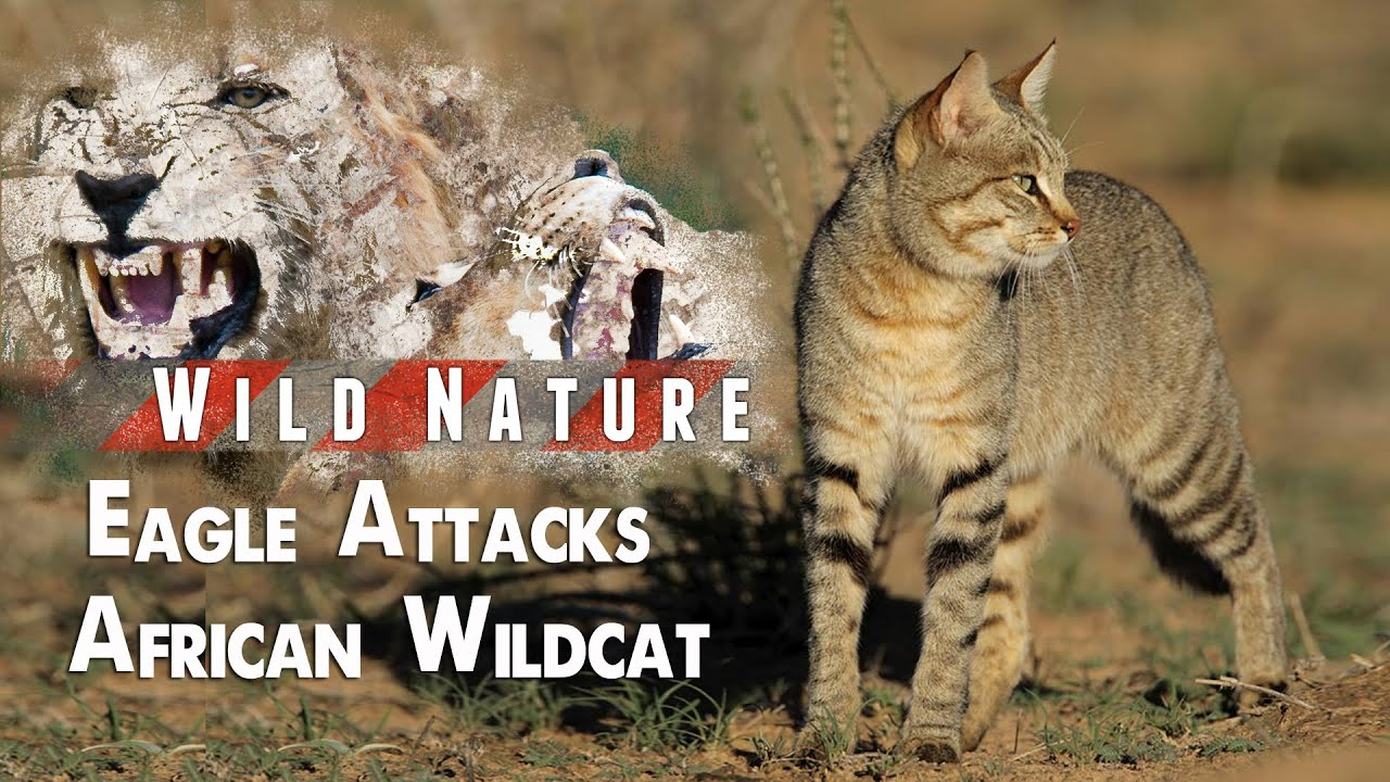 By Nature Cat Food