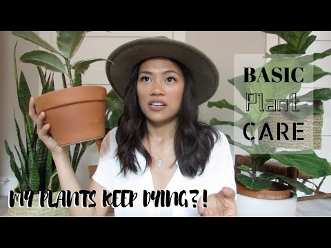 plant care guide for BEGINNERS   how to keep your plants alive