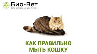 Как правильно мыть кошку. Ветеринарная клиника Био-Вет.