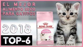 El mejor 🔥 Alimento Seco para Gatitos 😸 TOP-6 🔥
