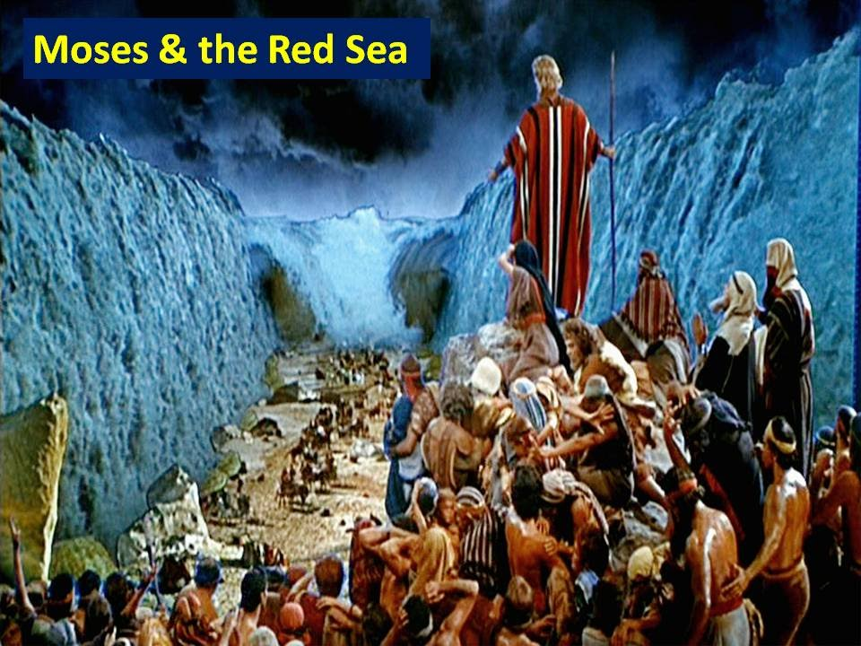 Moses Parting The Red Sea With Shark Pictures To Pin On