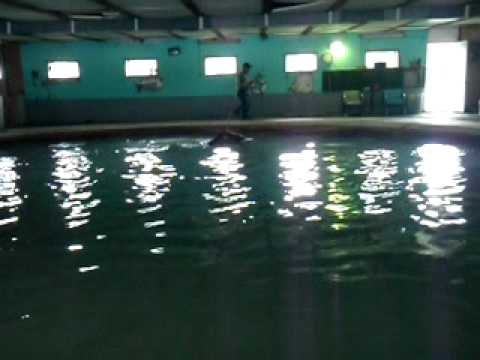 Thoroughbred Racehorse training/ Saratoga Springs Swimming Pool