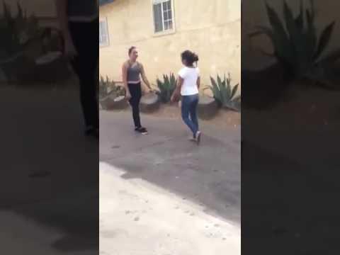 Oside Cat Fight