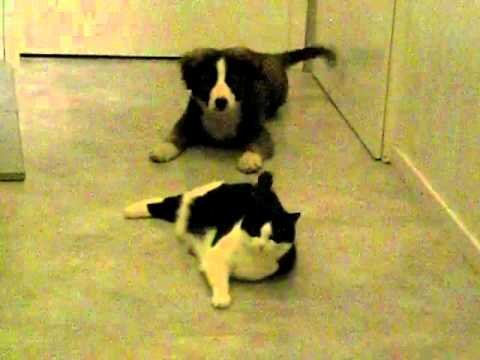 hund bellt katze an youtube. Black Bedroom Furniture Sets. Home Design Ideas