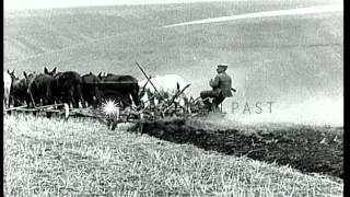 Mules pull a plow on a field and a farmer stands on the plow in the United Stat...HD Stock Footage