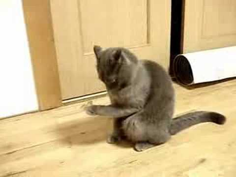 Кот офигел