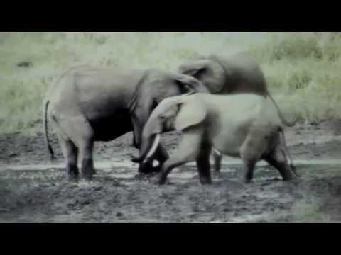 Ivindo National Park | WCS Gabon