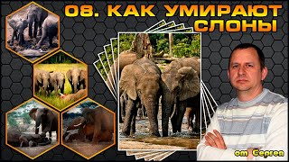 Выпуск 10. Как умирают слоны