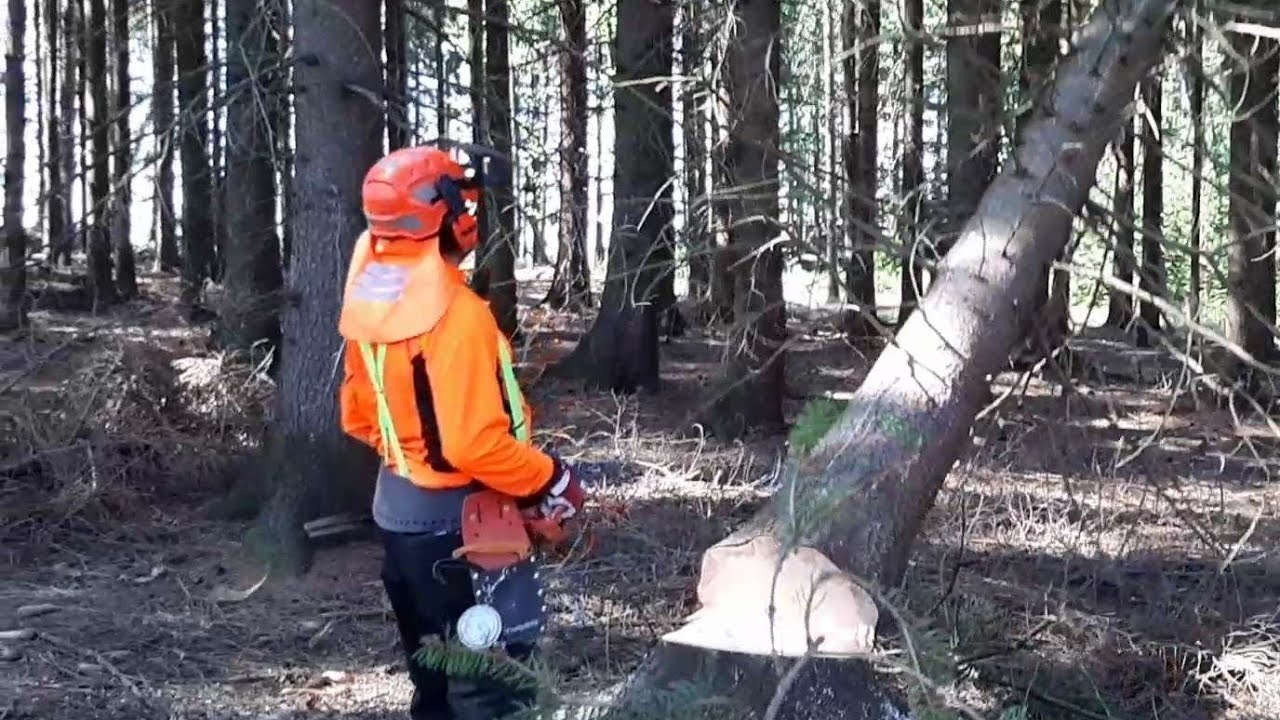 Lumberjack A small harvester and professional tree processing