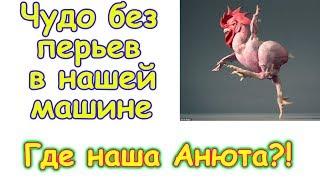 Чудо без перьев в машине. Где Анюта. (02.18г.) Семья Бровченко.