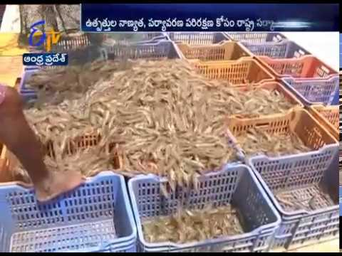 Use of Poultry Waste as Fish Feed Banned by Fisheries Department