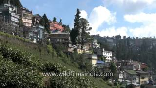 Darjeeling is situated along a ridge - Happy Valley Tea Estate located below