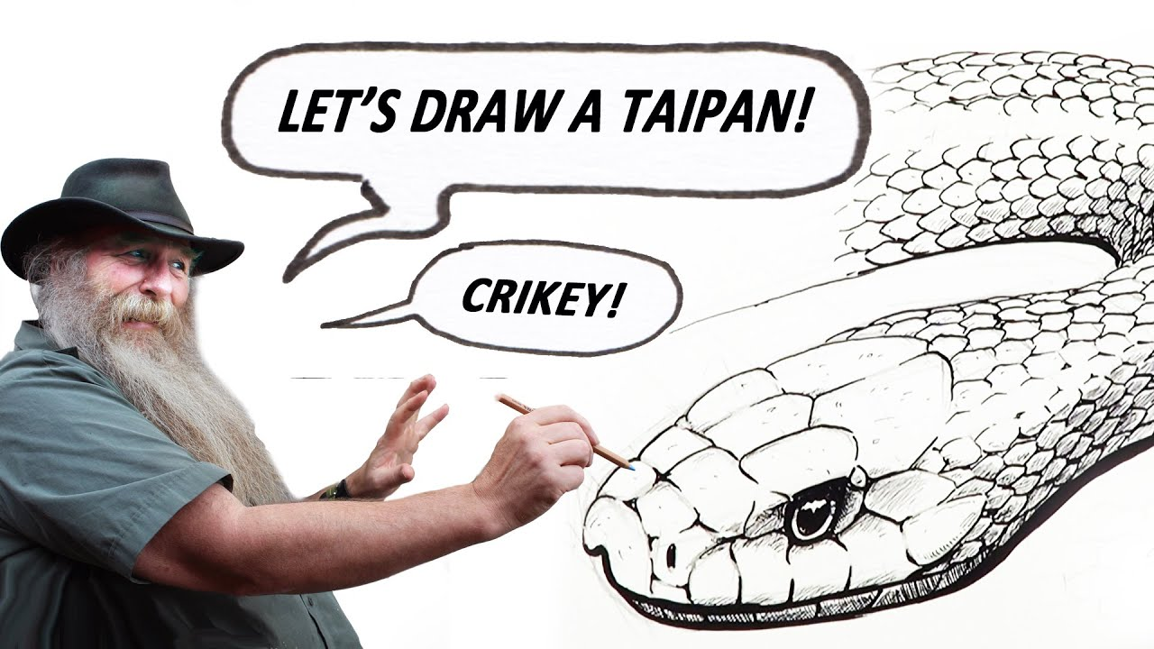 How To Draw A Taipan Intermediate To Advanced