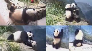 2021-06-05 Xiao Qi Ji ~ Log Grifter, & Irresistible Lil' Mister