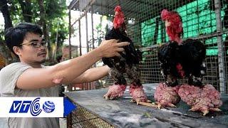 Truy tìm nguyên nhân khiến gà Đông Tảo vắng khách | VTC