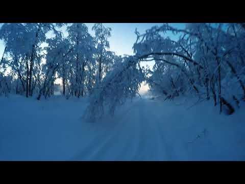 På skogsskidor till Kalix Älv, Kaalasjärvi