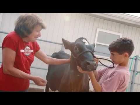 Rolling Lawns Farm – Registered Holsteins, Greenville, Illinois