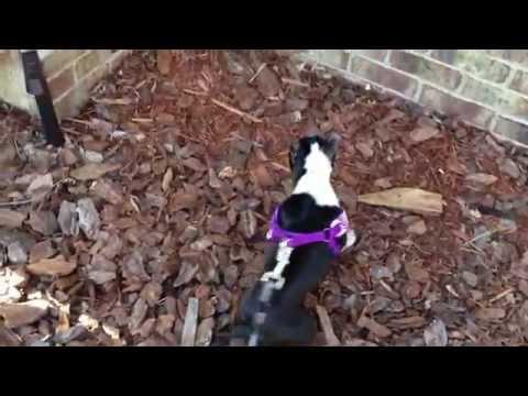 Crazy Puppy Dance - Dog Ballerina