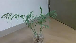 식물인테리어의 꽃!!  수경재배를 해봐요