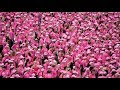 The Breast Cancer Campaign