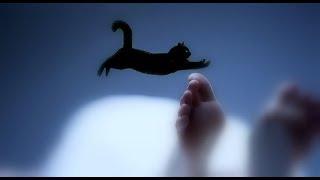 Linh miêu (mèo đen) và câu chuyện huyền bí