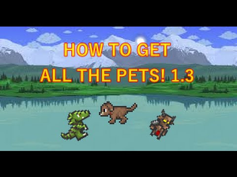 Terraria HOW TO GET ALL THE PETS (2016)