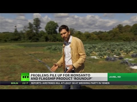 Monsanto hit with setbacks, but US bill could protect them from GMO labeling