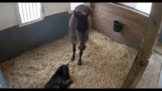 Mama Horse & 1-day-old foal relaxing | The Dodo LIVE