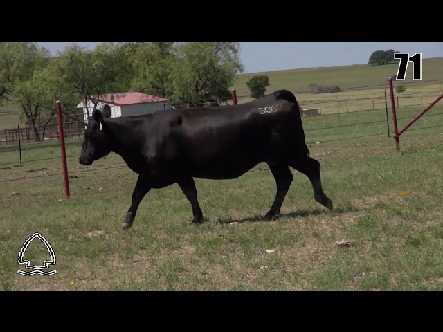 Pearcy Angus Ranch Lot 71