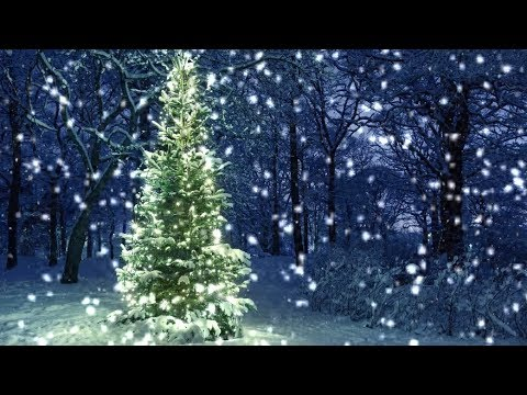 Christmas In The Woods.10 Hours Snowfall On Christmas Tree In The Woods Video Audio 1080hd Slowtv