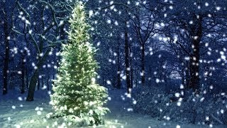 [10 Hours] Snowfall on Christmas Tree in the Woods  Video & Audio [1080HD] SlowTV