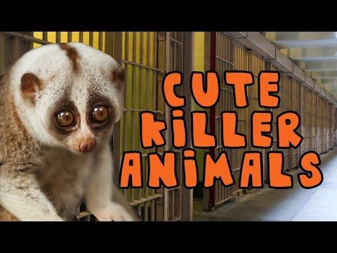 Cute Killer Animals