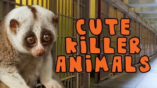Cute Killer Animals