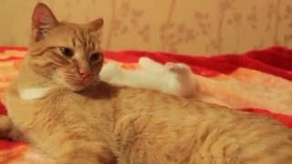 Появился котенок. Реакция взрослого кота. Часть 2