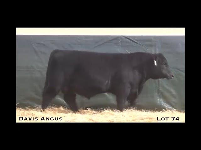 Davis Angus Lot 74