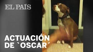 Un perro simula DESMAYARSE para evitar que le corten las uñas