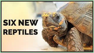 driving-500-miles-for-6-new-animals-virginia-reptile-road-trip