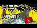 Suara Asli Kapas Tembak Gacor Pariasi Rool Tembakan  Mp3 - Mp4 Download