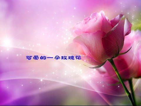 可爱的一朵玫瑰花 A Lovely Rose